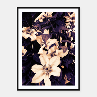 clematis 2 ls Framed poster thumbnail image