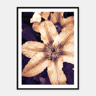 clematis 1 ls Framed poster thumbnail image