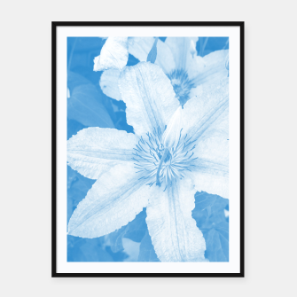 clematis 1 wb Framed poster thumbnail image