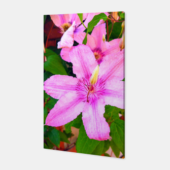 clematis 1 orig Canvas thumbnail image
