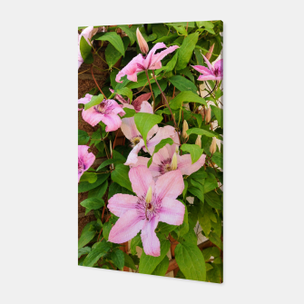 clematis 2 orig Canvas thumbnail image