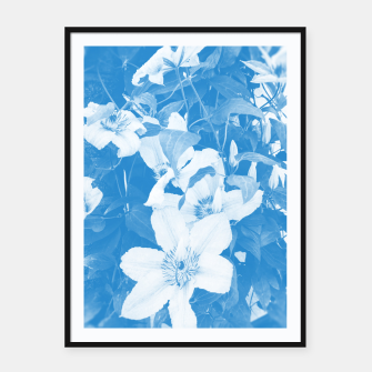 clematis 2 wb Framed poster thumbnail image