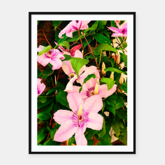 clematis 2 std Framed poster thumbnail image