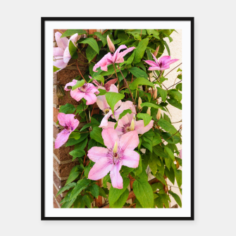 clematis 2 orig Framed poster thumbnail image