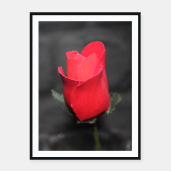 Thumbnail image of Photo Roses Rouge Affiche et cadre, Live Heroes