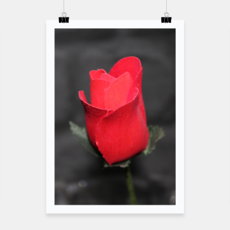 Photo Roses Rouge Affiche thumbnail image
