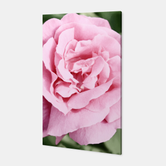 Thumbnail image of Photo Fleur Roses Toile, Live Heroes