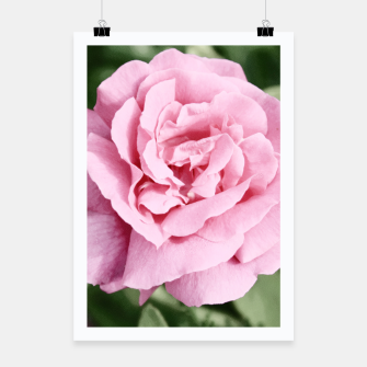 Thumbnail image of Photo Fleur Roses Affiche, Live Heroes
