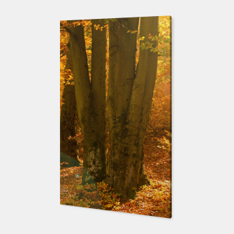 Thumbnail image of Sunny forest Canvas, Live Heroes