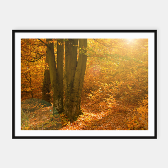 Thumbnail image of Sunny forest Framed poster, Live Heroes