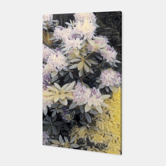 Miniaturka rhododendron Canvas, Live Heroes