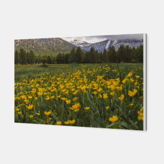 Thumbnail image of Spring Flowers - landscape, Live Heroes