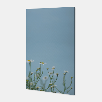 Miniature de image de Daisies by the lake Canvas, Live Heroes