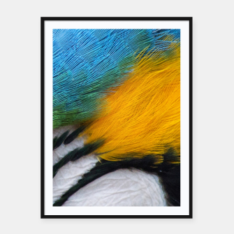 Thumbnail image of Macaw close up Plakat mit rahmen, Live Heroes