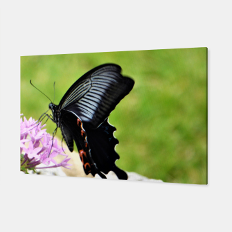 Miniatur black butterfly Canvas, Live Heroes