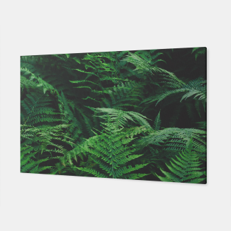 Thumbnail image of Fern Canvas, Live Heroes