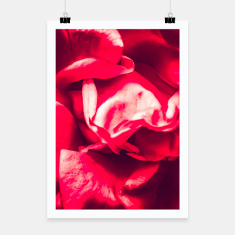 Thumbnail image of red rose Poster, Live Heroes