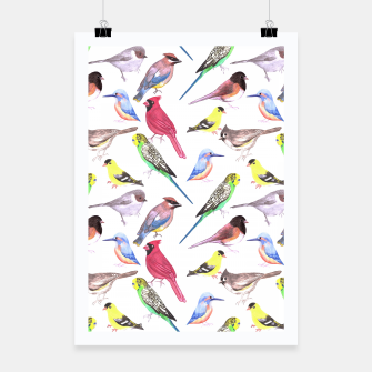 Thumbnail image of Various birds watercolor- budgie cardinal goldfinch titmouse kingfisher cedar waxwing juncos Poster, Live Heroes