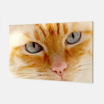 Cat with the blue eyes, cat face print  Canvas miniature