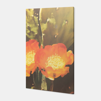 Thumbnail image of cactus blossom sunbeams Canvas, Live Heroes