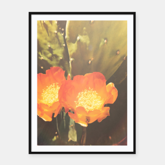 Thumbnail image of cactus blossom sunbeams Framed poster, Live Heroes