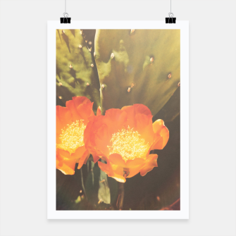 Thumbnail image of cactus blossom sunbeams Poster, Live Heroes