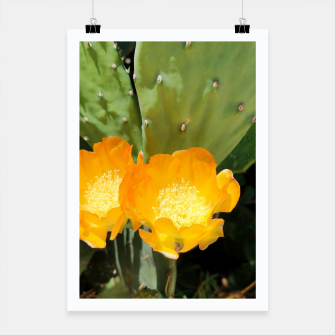 Thumbnail image of cactus blossom std Poster, Live Heroes