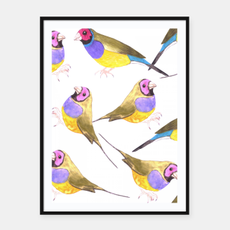 Miniatur Red headed male Gouldian finch or Erythrura gouldiae watercolor birds painting Framed poster, Live Heroes