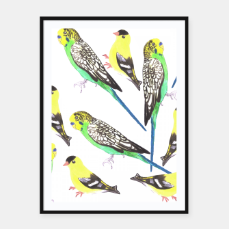 Miniatur Budgies and american goldfinches in watercolor  Framed poster, Live Heroes