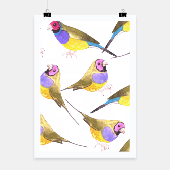 Miniatur Red headed male Gouldian finch or Erythrura gouldiae watercolor birds painting Poster, Live Heroes