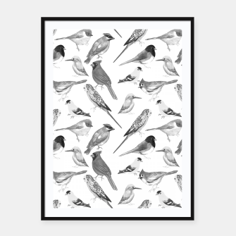 Thumbnail image of Black and white birds  Framed poster, Live Heroes