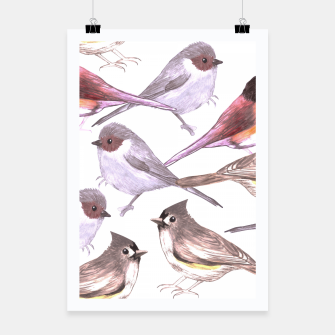 Miniatur Wild titmouses bushtits and juncos in watercolor Poster, Live Heroes