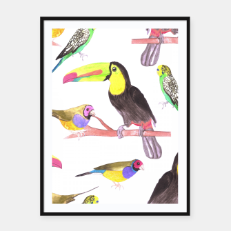 Thumbnail image of Colorful pet birds perched on a branch Framed poster, Live Heroes