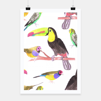 Thumbnail image of Colorful pet birds perched on a branch Poster, Live Heroes