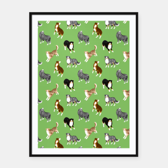 Thumbnail image of Australian Shepherd Pattern (Green Background) Framed poster, Live Heroes