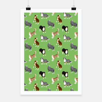 Thumbnail image of Australian Shepherd Pattern (Green Background) Poster, Live Heroes