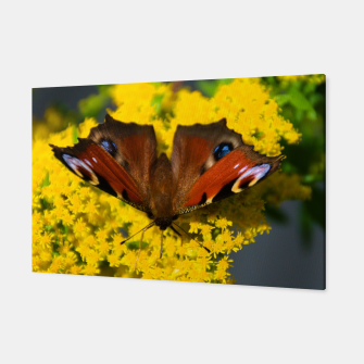 Thumbnail image of swallowtail butterfly Canvas, Live Heroes