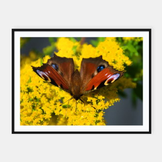 Thumbnail image of swallowtail butterfly Plakaty w ramie , Live Heroes