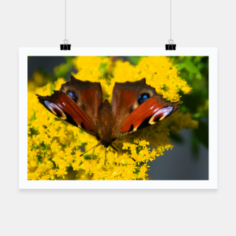 Thumbnail image of swallowtail butterfly Plakat, Live Heroes