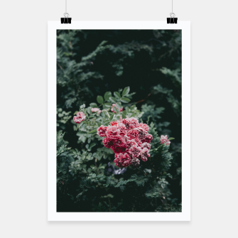 Red flowers Plakat thumbnail image