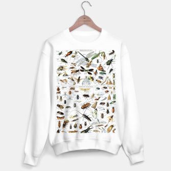 Fashion and of an Illustration Map with Insects, from Larouse Encyclopedia Sweater regular Bild der Miniatur