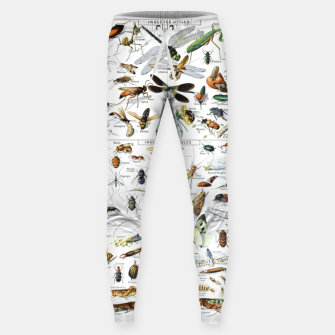 Fashion and of an Illustration Map with Insects, from Larouse Encyclopedia Sweatpants Bild der Miniatur