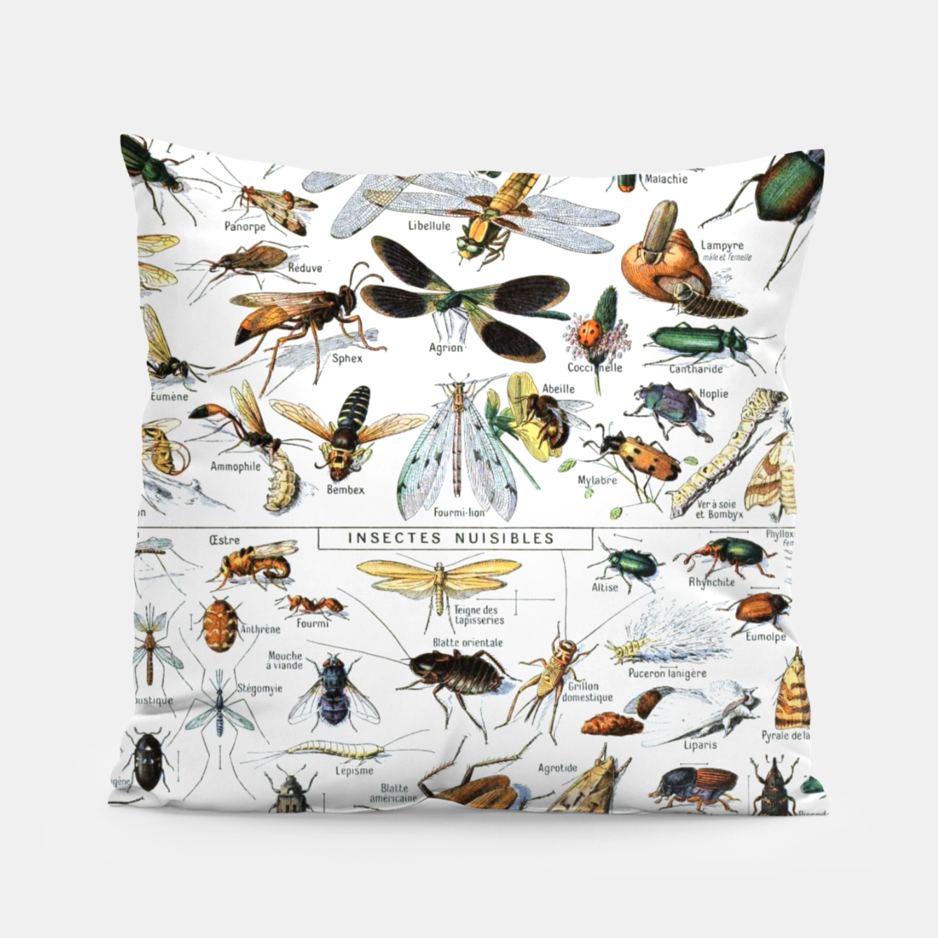 Foto Fashion and of an Illustration Map with Insects, from Larouse Encyclopedia Pillow - Live Heroes