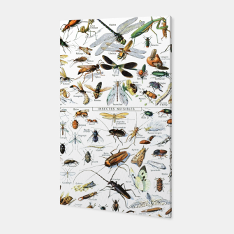 Fashion and of an Illustration Map with Insects, from Larouse Encyclopedia Canvas Bild der Miniatur