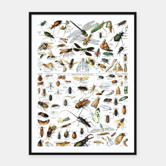 Fashion and of an Illustration Map with Insects, from Larouse Encyclopedia Framed poster Bild der Miniatur