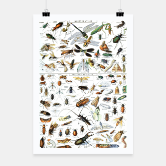 Fashion and of an Illustration Map with Insects, from Larouse Encyclopedia Poster Bild der Miniatur