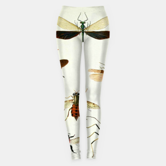 Fashion art of a illustration from a Encyclopedia about Insects Leggings Bild der Miniatur