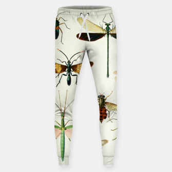 Fashion art of a illustration from a Encyclopedia about Insects Sweatpants Bild der Miniatur