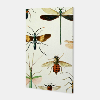 Fashion art of a illustration from a Encyclopedia about Insects Canvas Bild der Miniatur