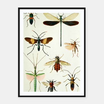 Fashion art of a illustration from a Encyclopedia about Insects Framed poster Bild der Miniatur